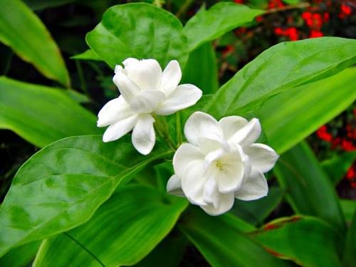 Năm mới hãy trồng 7 loại cây này trong nhà để đón may mắn và tài lộc