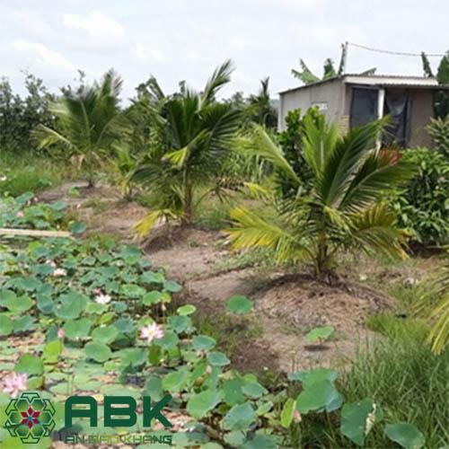 Đất vườn tạp là đất gì? Thực trạng đất vườn tạp ở Việt Nam